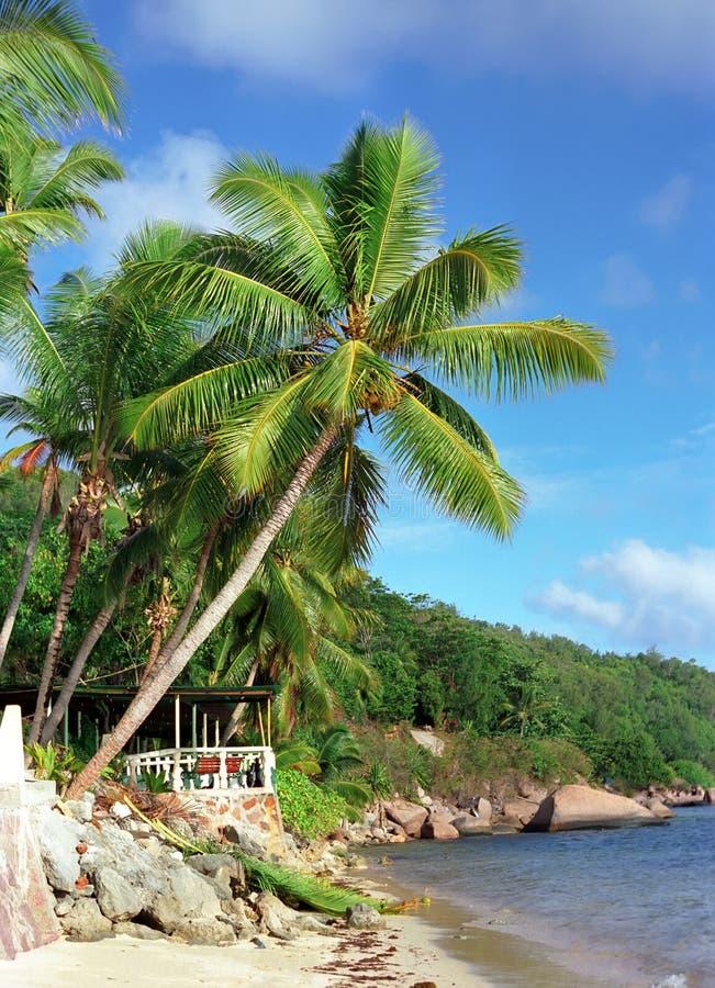 Download Seychellen stockbild. Bild von palme, seychellen, relax - 9080537