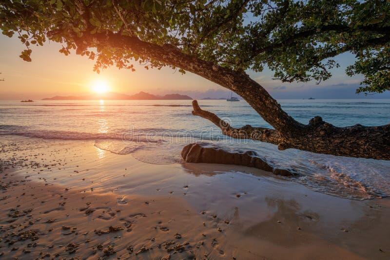 seychellen royalty-vrije stock foto's