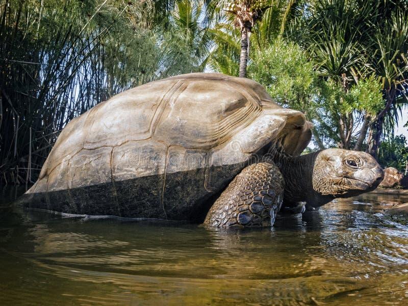 Seychellen-riesige Schildkröte lizenzfreie stockfotografie