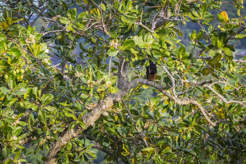 Seychellerna fruktslagträ royaltyfri fotografi