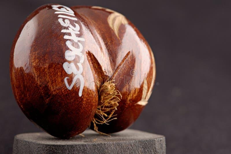 Seychellerna havs kokosnötter (coco de mer) - original- souvenir från Seychellerna arkivbild