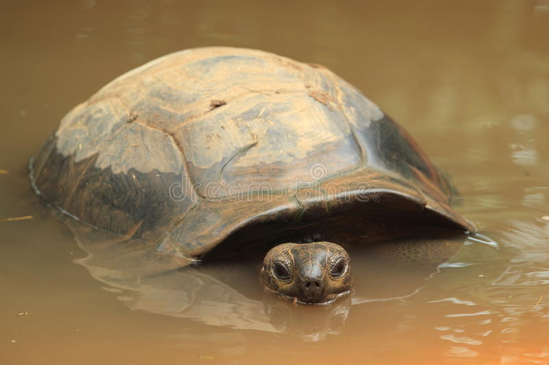 Download Seychelles giant tortoise stock image. Image of nature - 26595053