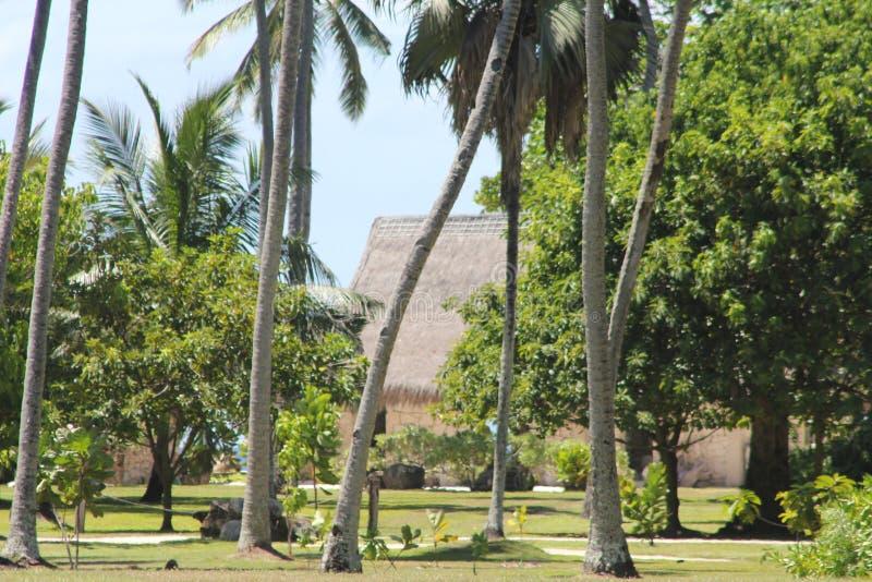 Seychelles palm plaża fotografia stock
