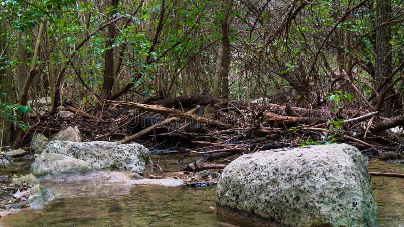 Sezione calma del fiume con le rocce in acqua e sulle banche, in legno della foresta fotografia stock