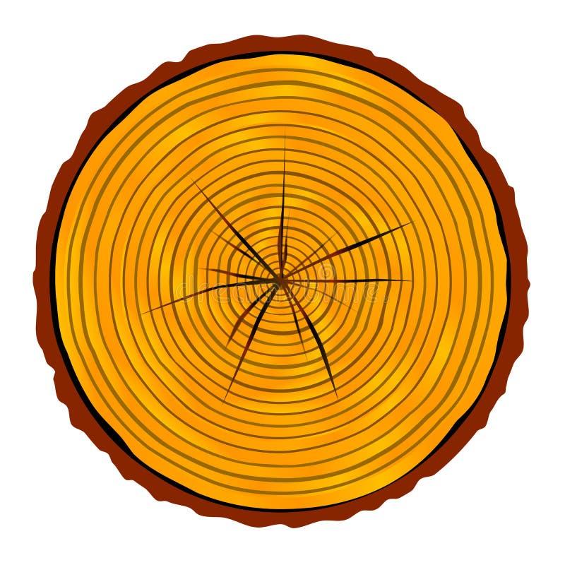 Sezione dell'estremità del legname illustrazione di stock