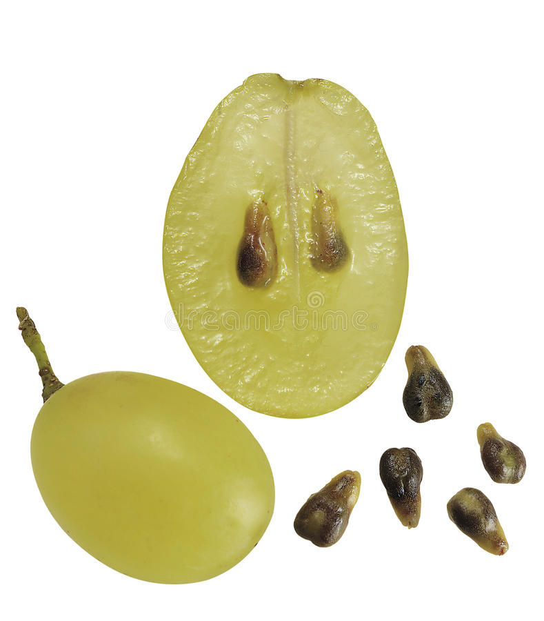 Sezione dell'uva fotografia stock