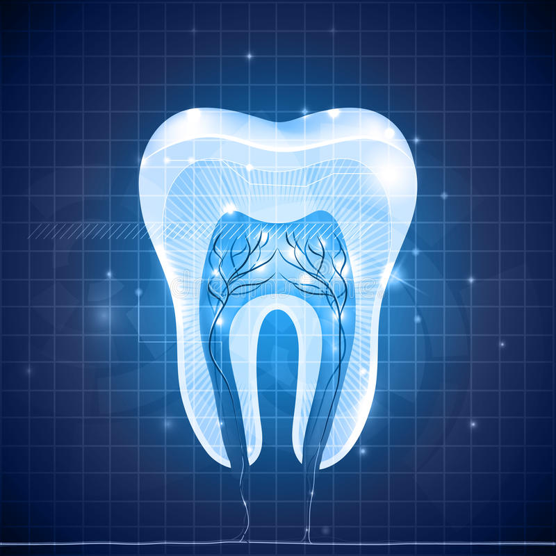 Sezione trasversale astratta del dente illustrazione vettoriale