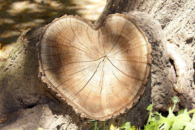 Sezione trasversale degli anelli di albero, taglio sotto forma di cuore immagini stock libere da diritti