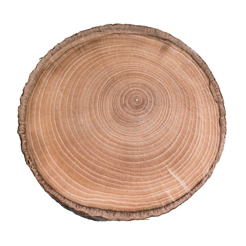Sezione trasversale del tronco di albero che mostra gli anelli isolati su fondo bianco fotografia stock