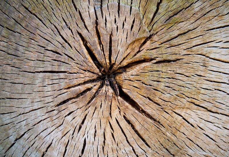 Sezione trasversale del tronco di albero fotografie stock libere da diritti