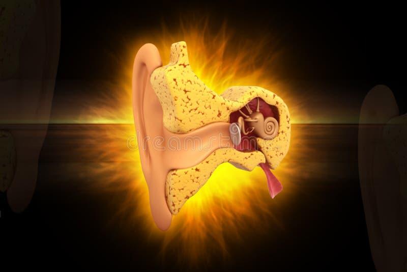 Sezione trasversale dell'orecchio illustrazione di stock
