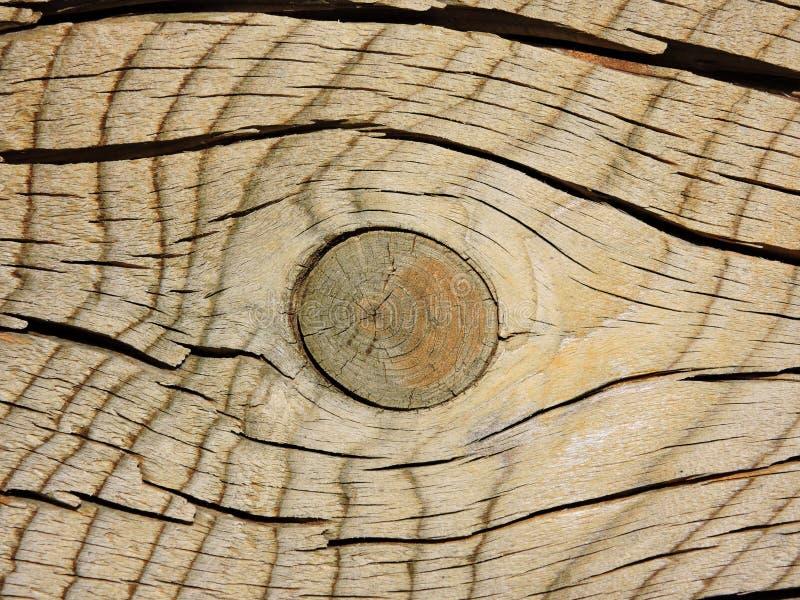 Sezione trasversale ed il nodo di vecchio albero come struttura di legno eccellente fotografia stock libera da diritti