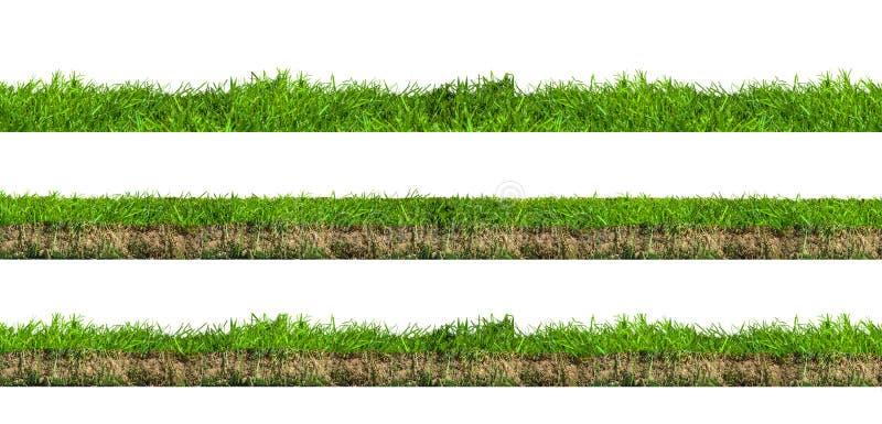 Sezioni dell'erba verde fotografia stock libera da diritti