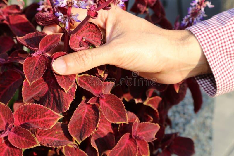 Sezon jesienny jest w miłości z Burgundy i wina kolorami dla spadku! zdjęcie royalty free