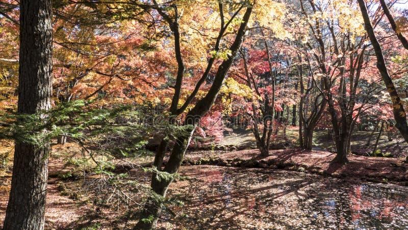 Sezon jesienny kamikochi park narodowy, Japonia fotografia stock