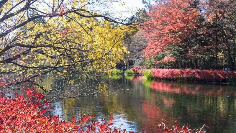 Sezon jesienny kamikochi park narodowy, Japonia zdjęcia royalty free