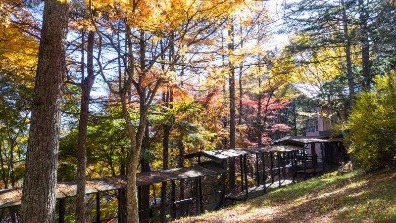 Sezon jesienny kamikochi park narodowy, Japonia obraz stock