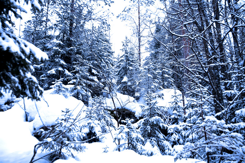 sezon lasowa zima obraz royalty free