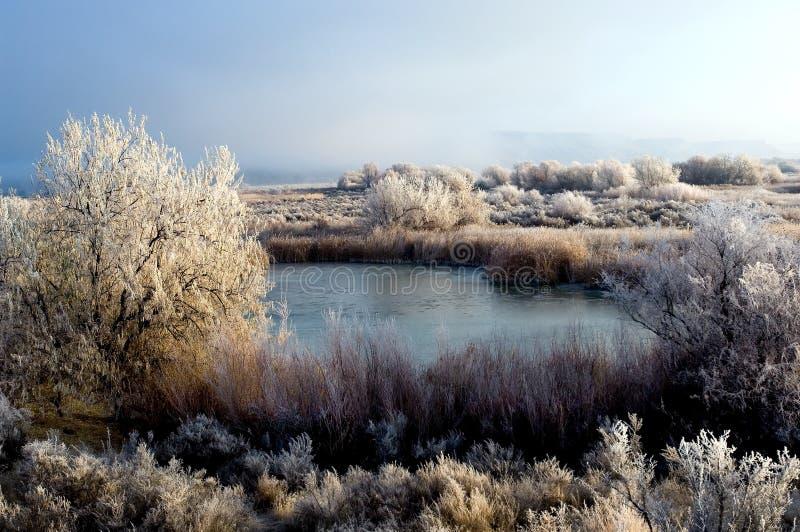 sezon zimy. fotografia royalty free