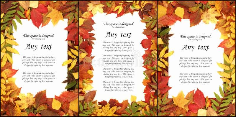 Sezonowy jesieni tło kolorowi liście ilustracja wektor