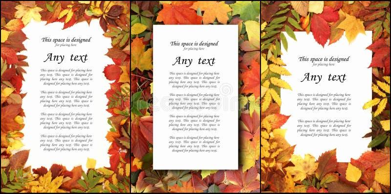 Sezonowy jesieni tło kolorowi liście Kolaż kolekcja ilustracja wektor