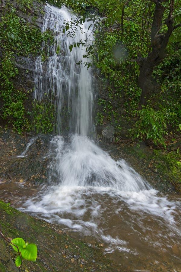 Sezonowy Wodny spadek przy obrzeżami las zdjęcie royalty free