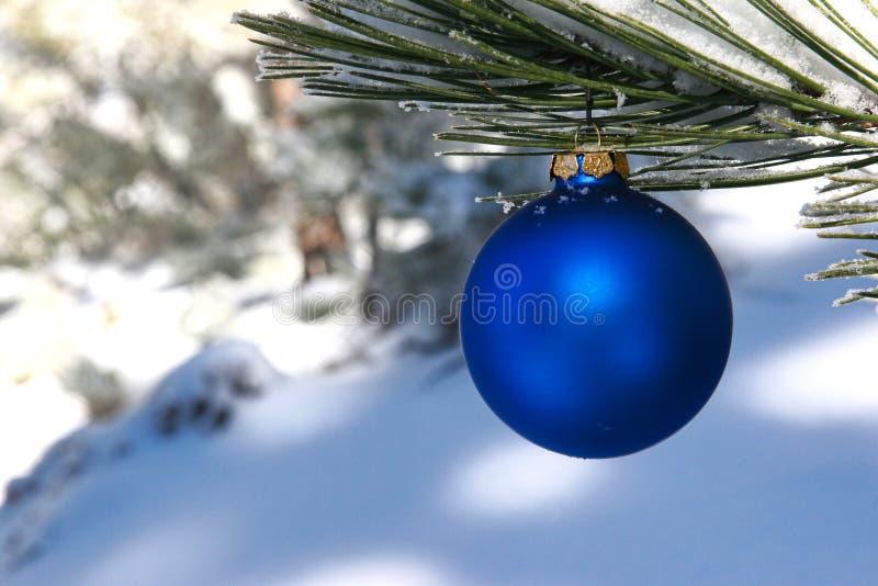 Sfera blu di natale in un albero di pino dello Snowy immagini stock libere da diritti