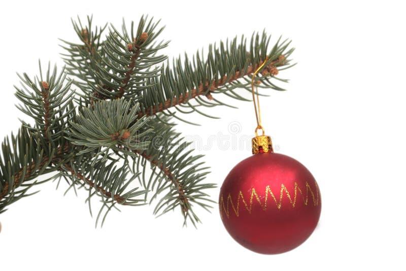 Sfera del nuovo anno e filiale rosse del pino immagini stock