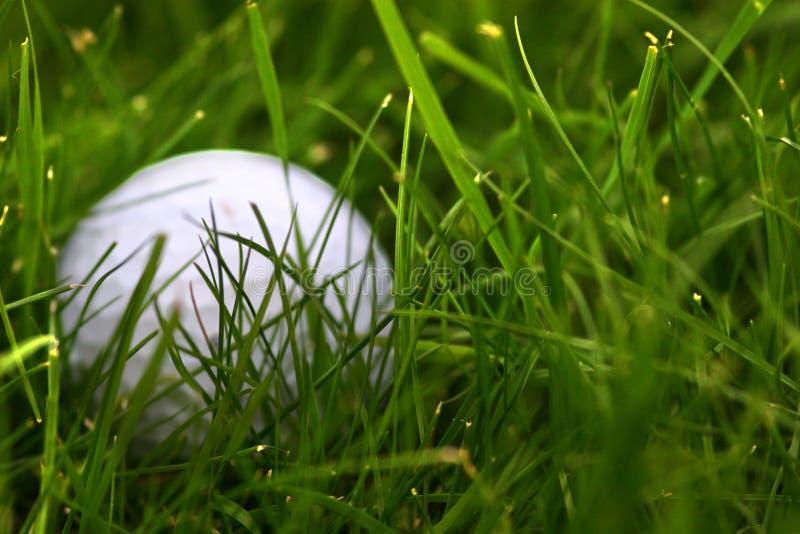 Sfera di golf persa fotografia stock