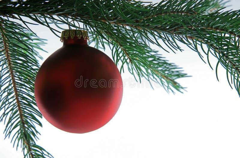 Sfera di natale sull'albero, primo piano immagine stock