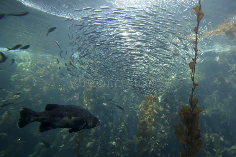Sfera di pesci fotografia stock