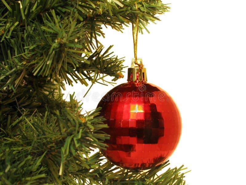 Sfera rossa sull'albero fotografie stock