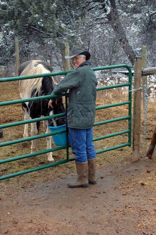 Sfidare il freddo per alimentare il suo cavallo immagini stock