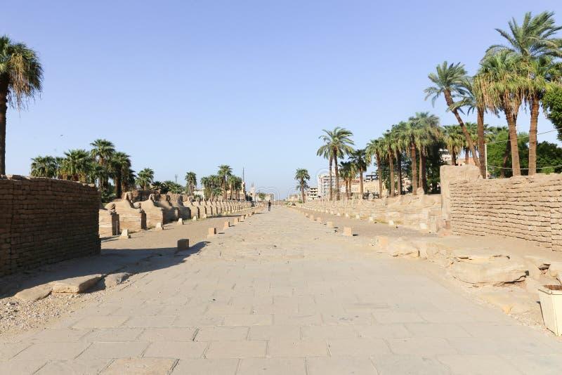 Sfinxväg - Egypten royaltyfri bild