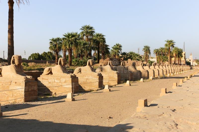 Sfinxväg - Egypten arkivbilder