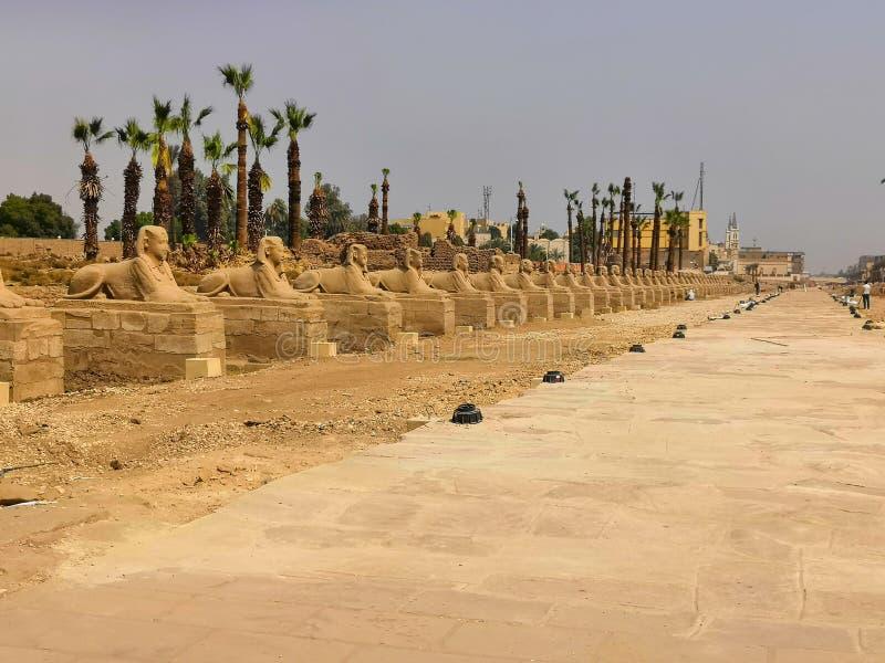 Sfinxweg Egypte royalty-vrije stock foto