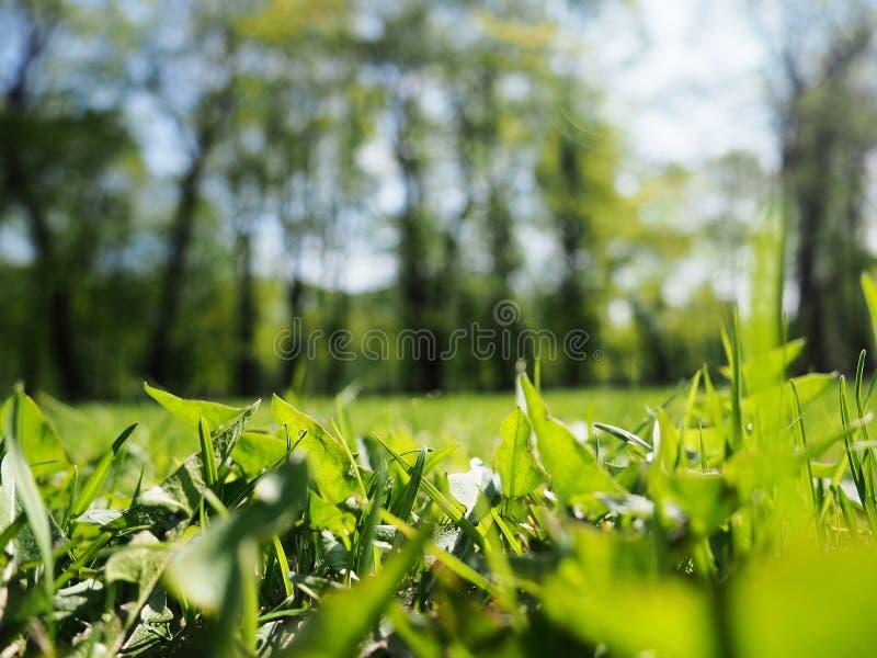 Sfondi naturali astratti con il bokeh di bellezza, fondo astratto della molla di arte o fondo di estate con erba fresca immagini stock