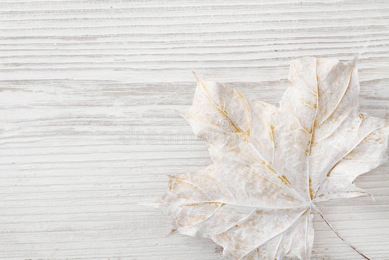 Sfondo di legno bianco, decomposizione della foglia d'acero d'inverno, trama di legno di legno colorato fotografia stock libera da diritti
