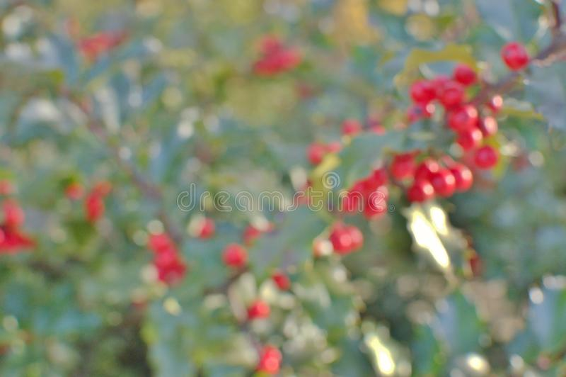 Sfondo Mistletoe Holiday predefinito per l'utilizzo di testo e la progettazione grafica fotografie stock libere da diritti