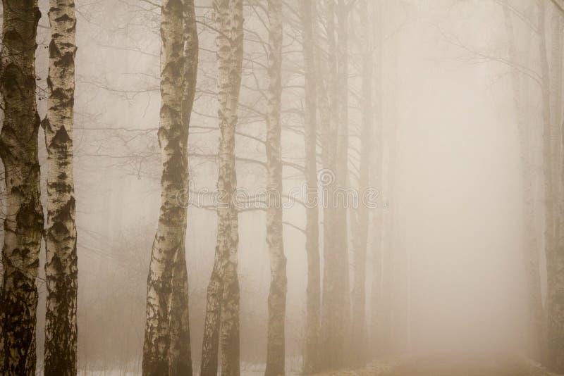 Sfondo naturale fotografia stock