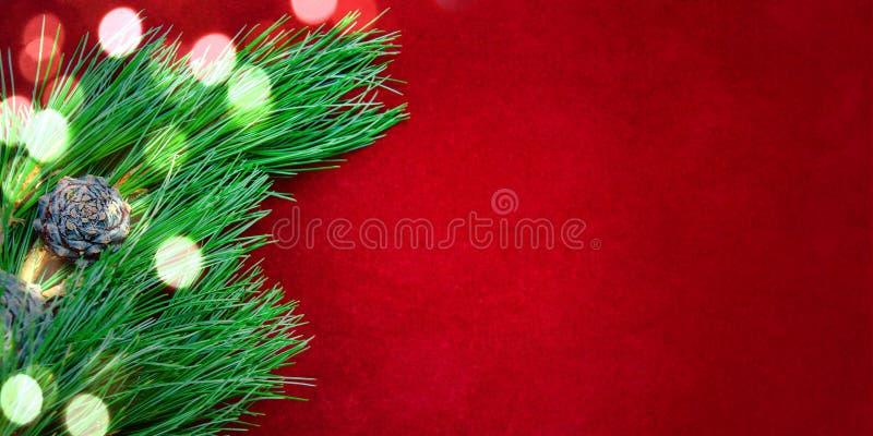 Sfondo naturale accogliente con i rami del pino per le carte del nuovo anno e di Natale fotografia stock