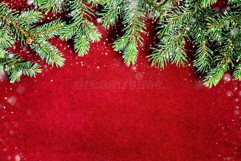 Sfondo naturale accogliente con i rami del pino per le carte del nuovo anno e di Natale immagine stock