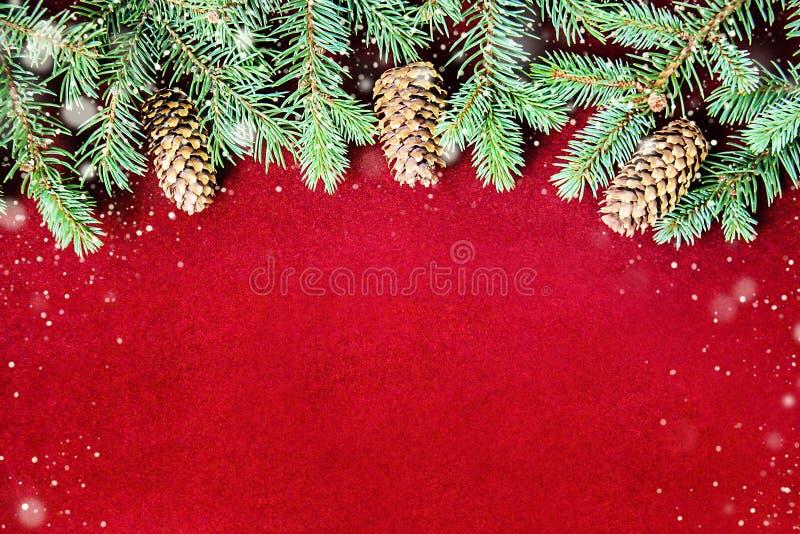 Sfondo naturale accogliente con i rami del pino per le carte del nuovo anno e di Natale immagine stock libera da diritti