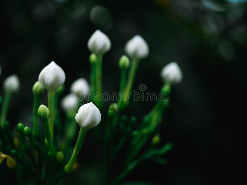 Sfondo naturale astratto del fiore bianco fotografie stock