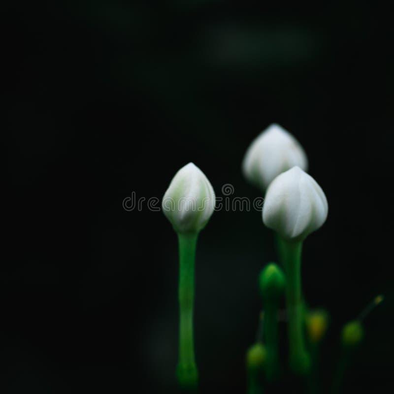 Sfondo naturale astratto del fiore bianco fotografie stock libere da diritti
