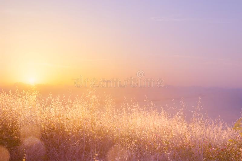 Sfondo naturale astratto di arte; prato soleggiato di estate fotografia stock