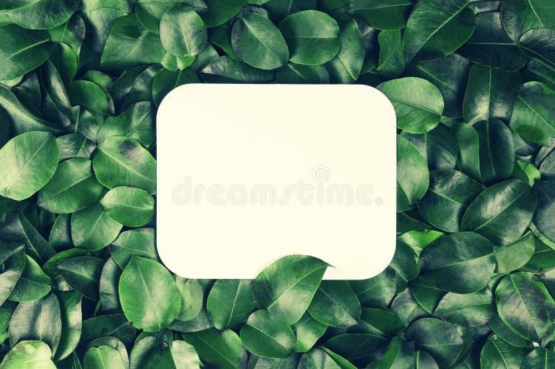 Sfondo naturale astratto Fondo di fogliame verde con il campo in bianco bianco per testo Concetto: natura, stazione termale fotografie stock libere da diritti