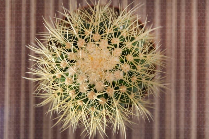 Sfondo naturale astratto, vista superiore del cactus in un vaso sullo scrittorio fotografie stock