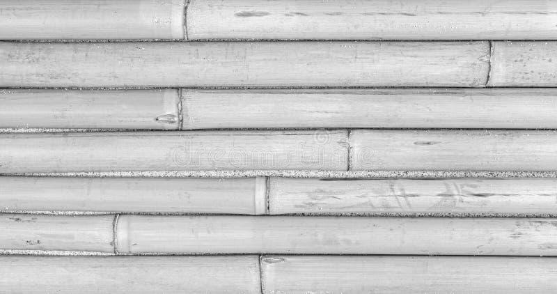 Sfondo naturale in bianco e nero fatto di bambù immagini stock libere da diritti