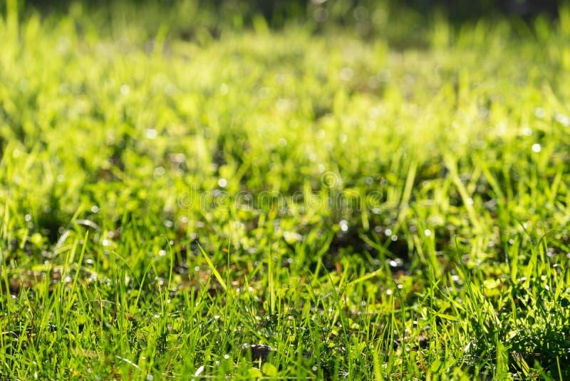 Sfondo naturale con erba verde al sole fotografia stock